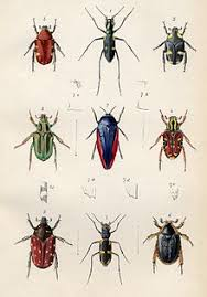 entomological